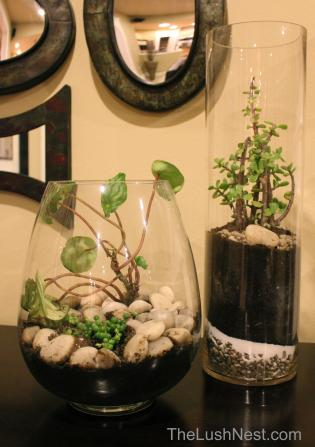 New Terrarium with the Old